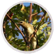 Round Beach Towel featuring the photograph Cedar Waxwing by James Peterson