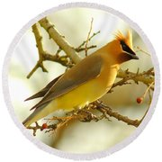 Cedar Waxwing Round Beach Towel by Robert Frederick
