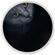 Chartreux Cat Standing In Front Round Beach Towel
