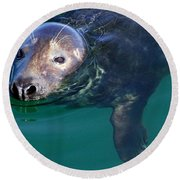 Chatham Harbor Seal Round Beach Towel by Stuart Litoff