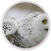 Cheeky Snow Owl Round Beach Towel