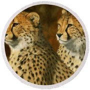 Cheetah Brothers Round Beach Towel by David Stribbling