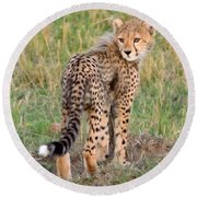 Cheetah Cub Looking Your Way Round Beach Towel