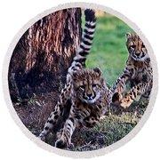 Cheetah Cubs Round Beach Towel