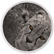 Cheetah Eyes Round Beach Towel