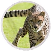 cheetah Running Portrait Round Beach Towel