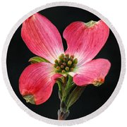 Cherokee Chief Dogwood Bloom Round Beach Towel