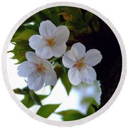 Round Beach Towel featuring the photograph Cherry Blossom by Andrea Anderegg