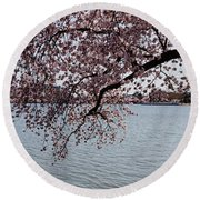 Cherry Blossom Trees With The Jefferson Round Beach Towel