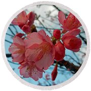Cherry Blossoms Round Beach Towel by Pamela Walton