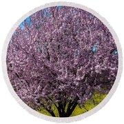 Cherry Tree In Bloom Round Beach Towel