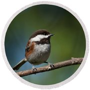 Chestnut Backed Chickadee Perched On A Branch Round Beach Towel