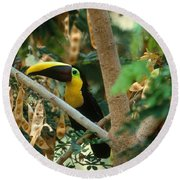 Chestnut-mandibled Toucan Round Beach Towel by Art Wolfe