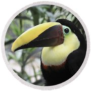 Round Beach Towel featuring the photograph Chestnut-mandibled Toucan by Teresa Zieba