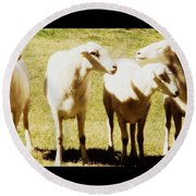 Round Beach Towel featuring the photograph Cheviot Sheep by Kathy Barney