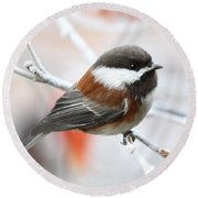 Chickadee In Winter Round Beach Towel by Peggy Collins