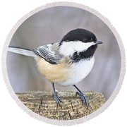 Chickadee On A Used To Be Tree Round Beach Towel by Heather King