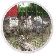 Chicken Coop. Round Beach Towel by Francine Heykoop
