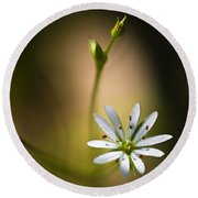 Chickweed Blossom And Bud Round Beach Towel