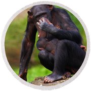 Chimp With A Baby On Her Belly  Round Beach Towel
