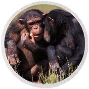 Chimpanzees Eating A Carrot Round Beach Towel by Nick  Biemans