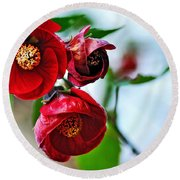 Chinese Lantern - Abutilon Round Beach Towel