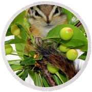 Round Beach Towel featuring the photograph Chip Or Dale by Barbara Chichester