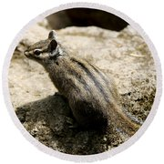 Chipmunk On A Rock Round Beach Towel by Belinda Greb