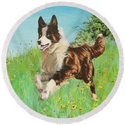 Chocolate Border Collie In Meadow Round Beach Towel