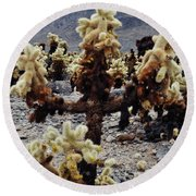 Cholla Cactus Garden Portrait Round Beach Towel