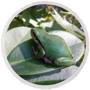 Chorus Frog On A Rhodo Round Beach Towel by Cheryl Hoyle