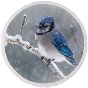 Christmas Card Bluejay Round Beach Towel