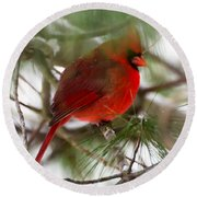 Round Beach Towel featuring the photograph Christmas Cardinal by Kerri Farley