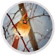 Northern Cardinal Snow Scene Round Beach Towel by Nava Thompson