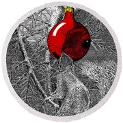 Christmas Tree Squirrel With Red Ornament Round Beach Towel