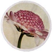 Chrysanthemum Domino Pink Round Beach Towel