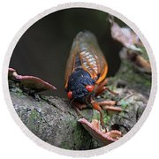 Cicada - The Red-eyed Monster Round Beach Towel by Yvonne Wright