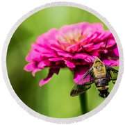 Clearwing Moth Round Beach Towel by Debbie Green