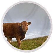 Cliffs Of Moher Brown Cow Round Beach Towel