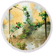 Round Beach Towel featuring the photograph Climbing Rose Plant by Silvia Ganora