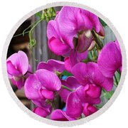 Round Beach Towel featuring the photograph Climbing Sweet Peas by Bruce Bley