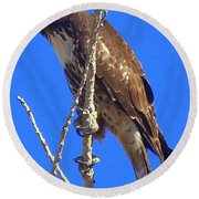 Hawk Close Up  Round Beach Towel