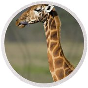 Close-up Of A Giraffe Giraffa Round Beach Towel