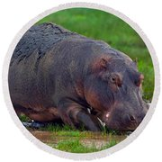 Close-up Of A Hippopotamus, Lake Round Beach Towel by Panoramic Images