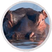 Close-up Of A Hippopotamus Submerged Round Beach Towel by Panoramic Images