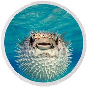 Close-up Of A Puffer Fish, Bahamas Round Beach Towel