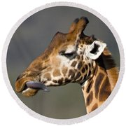 Close-up Of A Rothschilds Giraffe, Lake Round Beach Towel