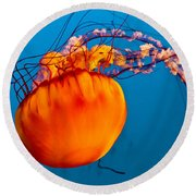 Round Beach Towel featuring the photograph Close Up Of A Sea Nettle Jellyfis by Eti Reid