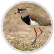 Close-up Of A Southern Lapwing Vanellus Round Beach Towel by Panoramic Images