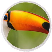 Close-up Of A Toco Toucan Ramphastos Round Beach Towel